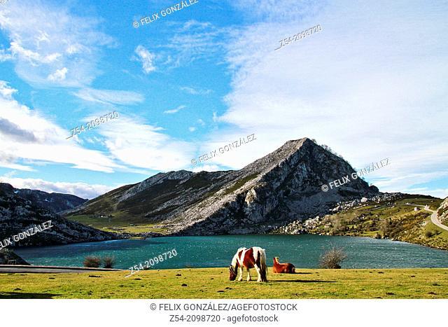 Lake Enol, horses grazing, Picos de Europa National Park, Covadonga, Asturias, Spain