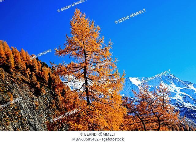 Austria, Tyrol, Osttirol, national park Hohe Tauern, Kalser valley, larch wood, mountain landscape