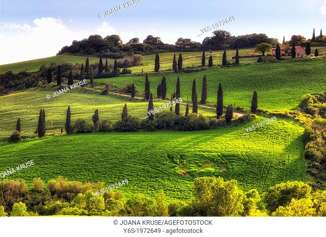 cypress alley in Val d'Orcia