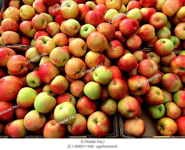 Organic farm apples