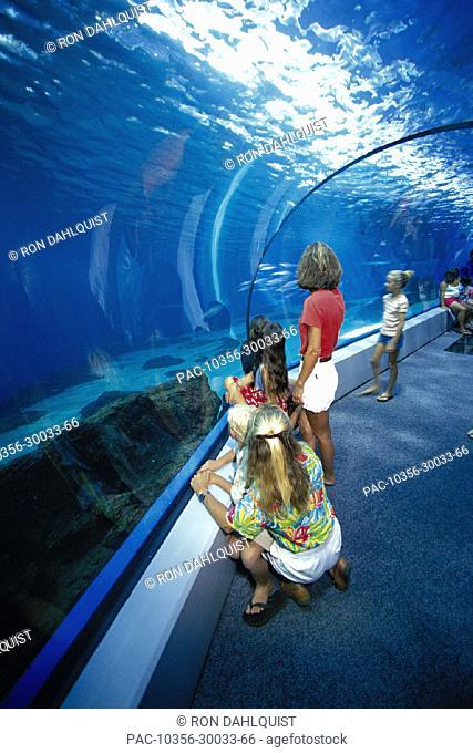 Hawaii Maui Ocean Center inside ocean walkway, local people & visitors D1497 Maalaea