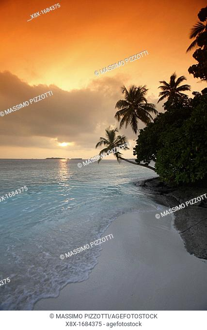 Palm tree at sunset, Biyadhoo island, Maldives