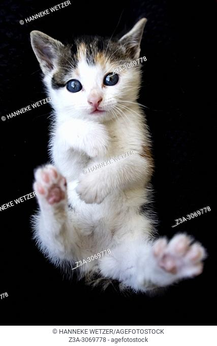 Cute baby kitten on black background
