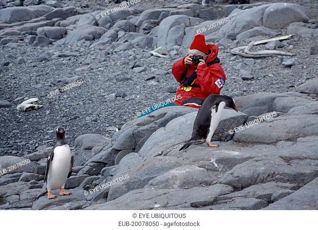 Port Lockroy. Tourist photographing Gentoo Penguin on rocks