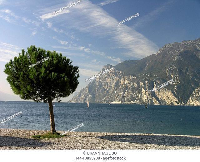 Italy, Europe, Lake Garda, Riva del Garda, Trentino-Alto Adige, landscape, mountains, alps, pine tree, windsurfers, No