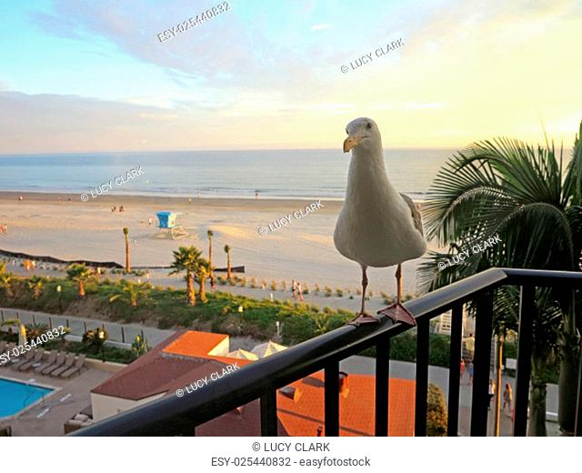 A seagull standing on a railing at sunset