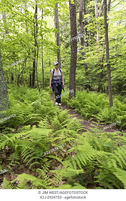 Indiana, Pennsylvania - Susan Newell, 68, hikes by ferns on a trail in Yellow Creek State Park
