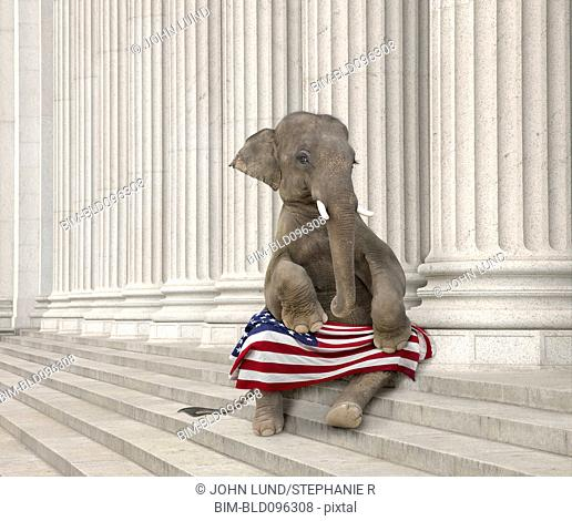 Elephant sitting steps with American flag
