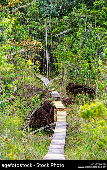 The Tajor trail inside the Baku National Park is a two and half hour walk, crosses different vegetation zones and leads to the bay and beach of Teluk Tajor in...