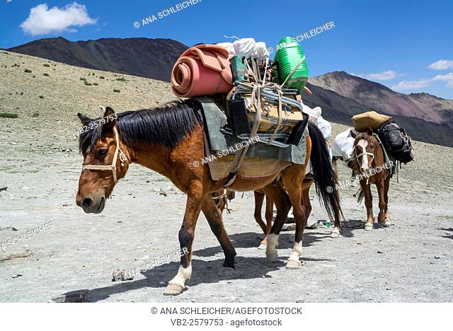 Horse caravan. Trekking in Markha valley (Laddakh, India)