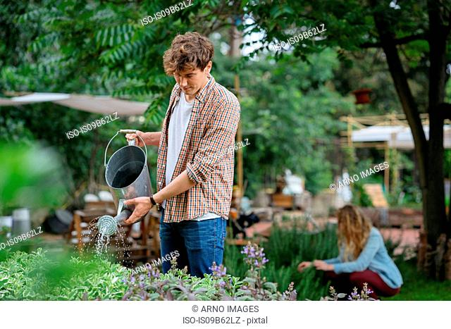 Young man and woman tending to plants in urban garden, man watering plants using watering can