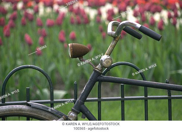 Bicycle parked near bed of tulips, Amsterdam, the Netherlands