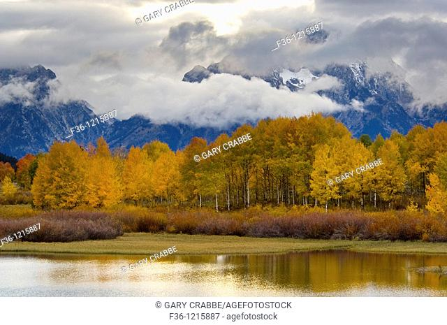 Aspen trees and fall storm clouds over Mount Moran, at Oxbow Bend, Snake River, Grand Teton National Park, Wyoming