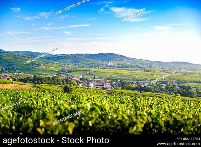 Paysage et vignobles du Beaujolais, Fleurie Chiroubles et Villié-Morgon, France