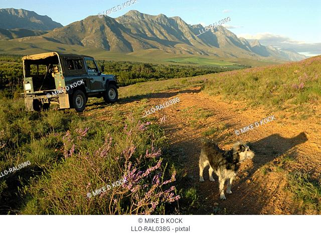 Outdoor life with dog and 4x4 in the spring, Riviersonderend mountains near Greyton, Overberg, Western Cape Province, South Africa