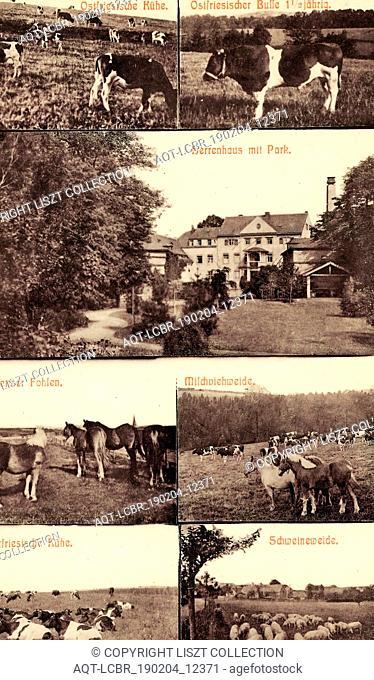 Multiview postcards, Cows in Germany, Cattle of Landkreis Sächsische Schweiz-Osterzgebirge, Horses of Landkreis Sächsische Schweiz-Osterzgebirge