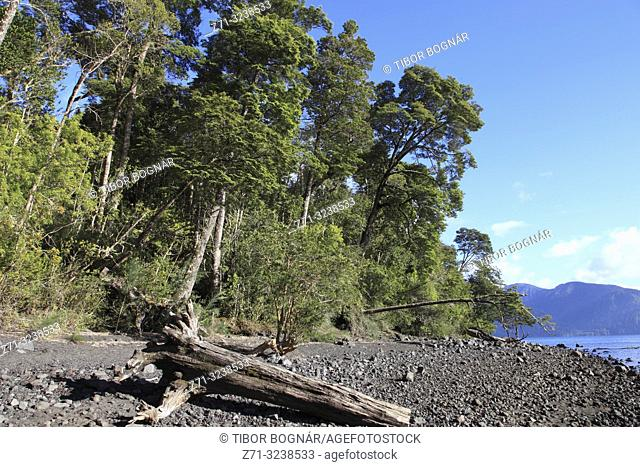 Chile, Lake District, Petrohue, forest, trees,