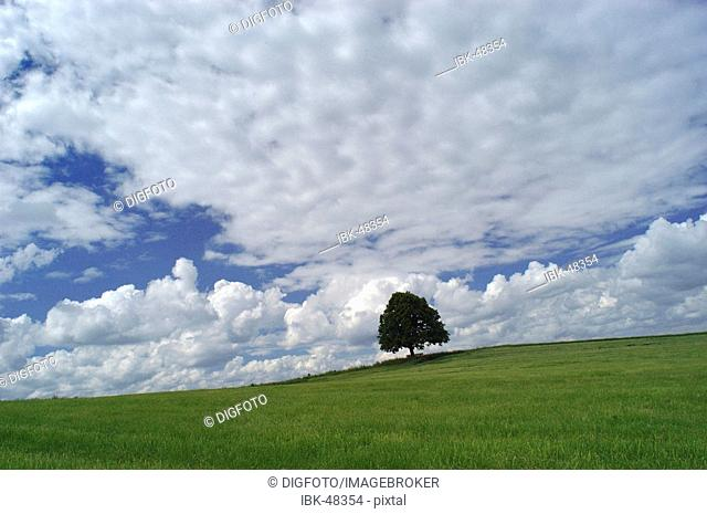 Solitary tree in front of cloudy sky