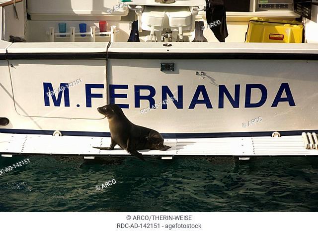 Galapagos Sea Lion on boat San Cristobal San Cristobal Island Galapagos Islands Ecuador Zalophus californianus wollebaeki