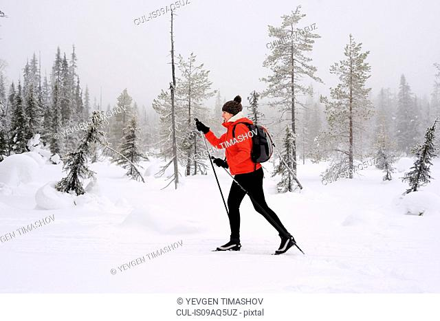 Young woman nordic walking in snow covered forest, Posio, Lapland, Finland