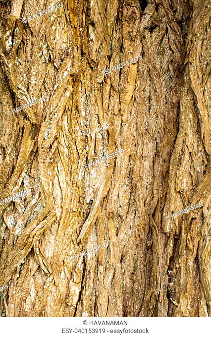 rough surface bark of willow