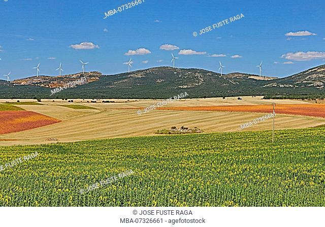 Spain, Teruel Province, Sunflowers field
