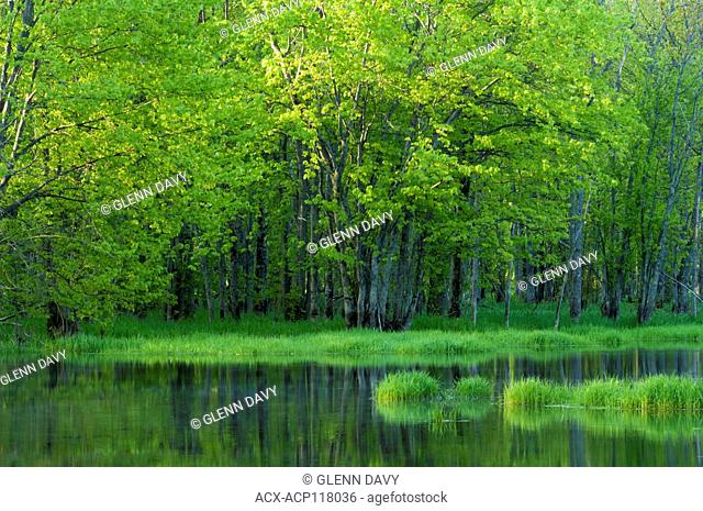 Backwater area, Beaver River in Spring, near Kimberley, Ontario, Canada