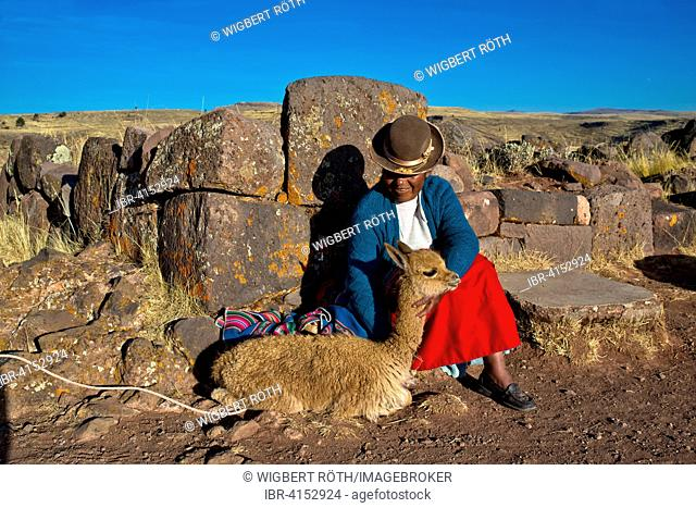 Aymara Indian woman in traditional dress sitting against stone wall with guanaco (Lama guanicoe), burial ground at Sillustani, Puno Region, Peru