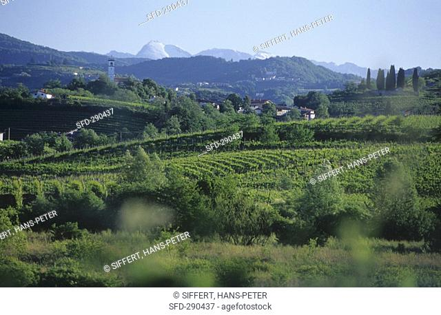 Collio region on the Slovenian border, Friuli, Italy Not available in CH