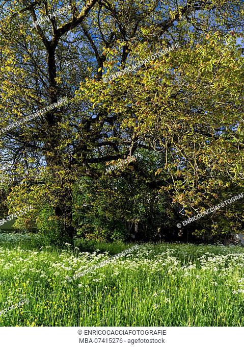 Spring in the Zurich Oberland / Zurich highlands
