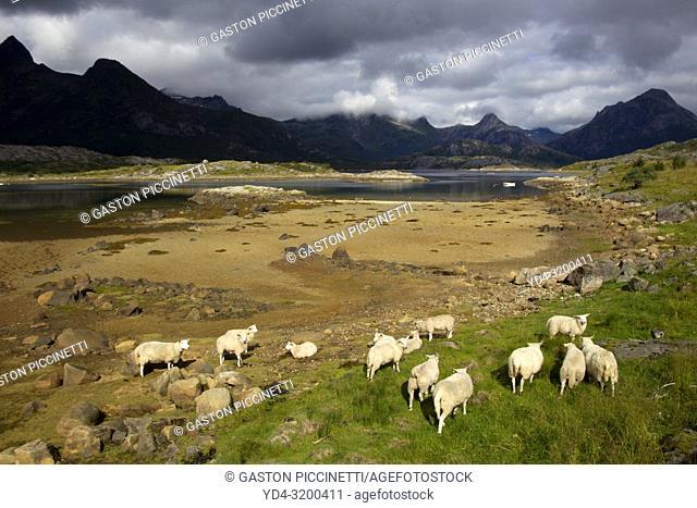 Lofoten islands, Nordland county, Norway.