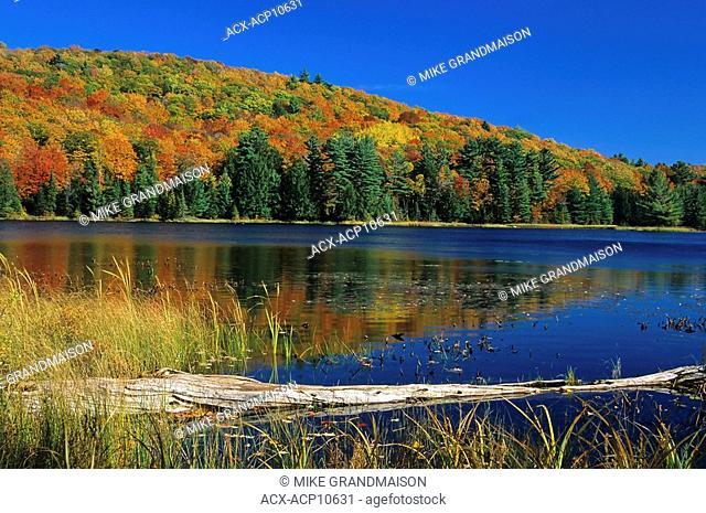 Autumn scenic, Gatineau Park, Quebec, Canada