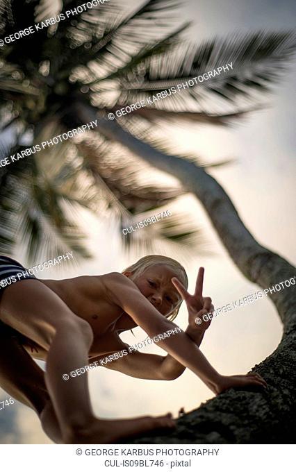 Young boy climbing palm tree, gesturing peace sign towards camera, low angle view, Beqa, Fiji