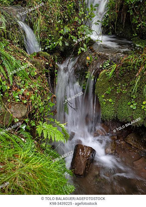 Robledal de Ucieda, parque natural del Saja-Besaya, Cantabria, Spain