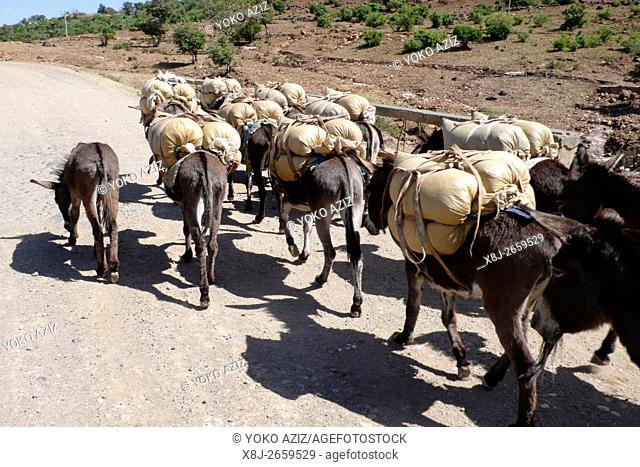 ethiopia, donkeys