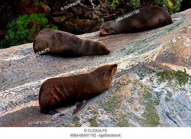 Milford Sound, New Zealand. Seals
