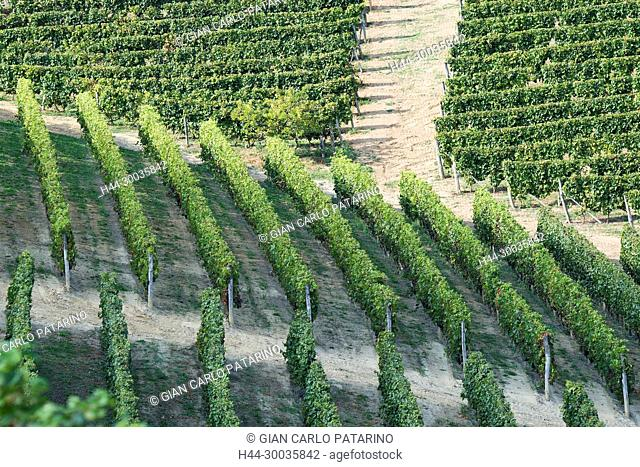 Italy, panorama of vineyards of Piedmont Langhe-Roero and Monferrato on the World Heritage List UNESCO. The Contini Tower near Canelli Italy, Piedmont