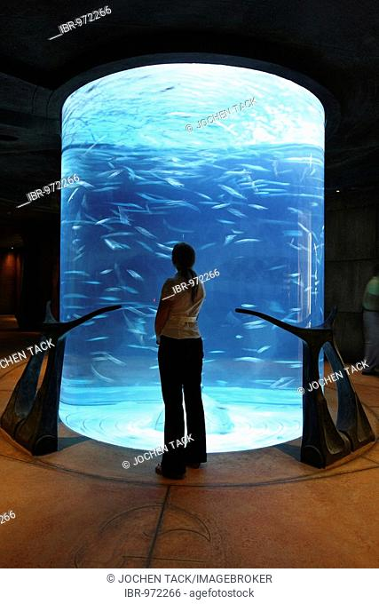 The Lost Chambers, Atlantis Adventure Park, part of the Ambassador Lagoon, an 11 million liter aquarium with over 60000 fish, Atlantis Hotel, The Palm, Dubai