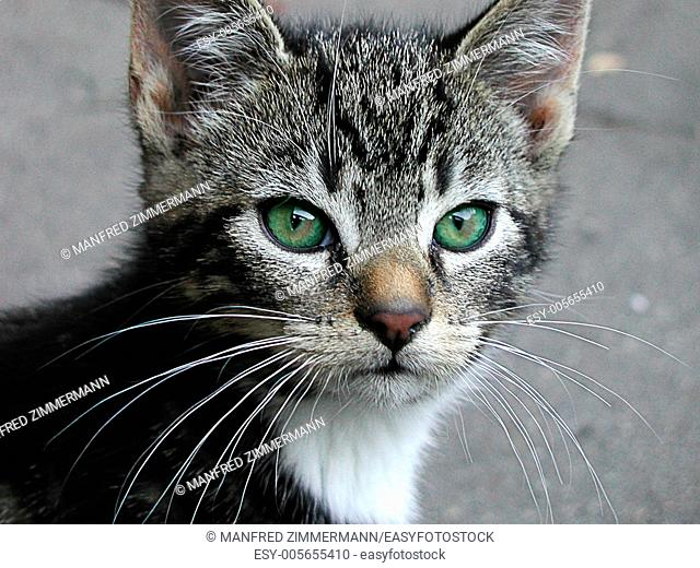 Head of young cat with green eyes