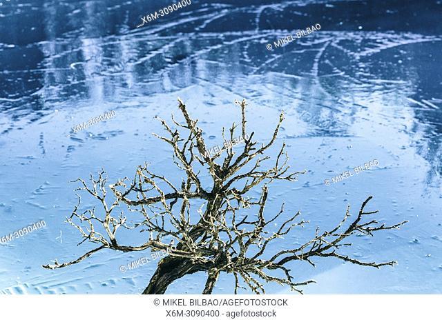 Tree on an frozen lake