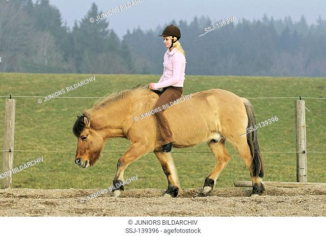 young lady rider riding on Icelandic horse