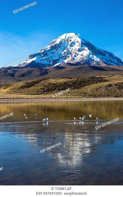 Sajama volcano and lake Huañacota, in the Natural Park of Sajama. Bolivia