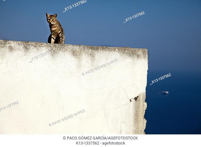 Cat  Island of Folegandros, Cyclades, Greece