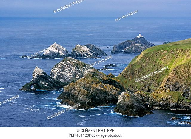 Gannetry on sea stacks and the Muckle Flugga lighthouse, Britain's most northerly lighthouse on the island Unst, Shetland Islands, Scotland, UK
