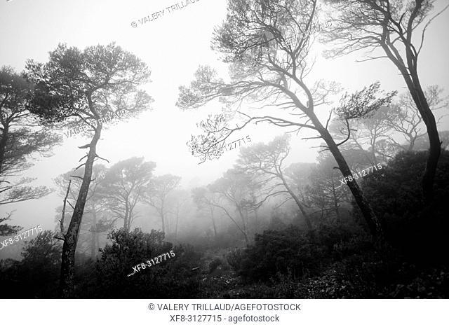 Foret dans la brume, Var, PACA