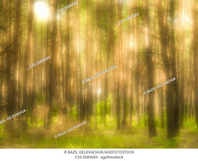 Forest and light spots photographed with a monocle