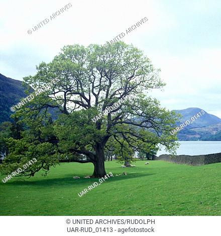 Eine Reise durch das schottische Hochland bei Aviemore; Schottland 1980er Jahre. Traveling through the Scottish Highlands near Aviemore; Scotland 1980s