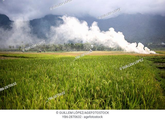 Rice field in the Harau Valley, Sumatra, Indonesia