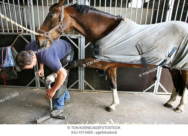 Farrier at work  Horsehoes need to be replaced every 6 weeks  The job is extremely hard resulting in back problems