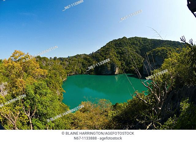 Talay Nai Emerald Lake, Mae Ko island, Angthong National Marine Park 42 limestone islands near Koh Samui island, Gulf of Thailand, Thailand